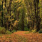 Path Through the Autumn Woods by Don Schwartz