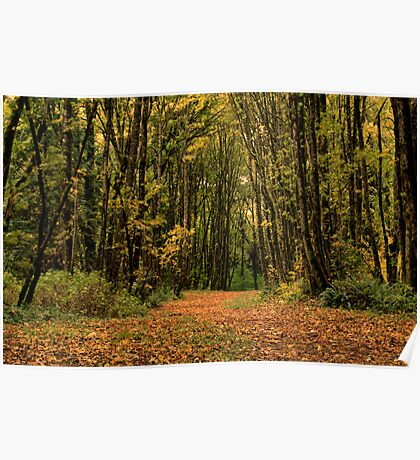 Path Through the Autumn Woods Poster