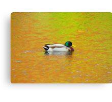 Color Duck Canvas Print