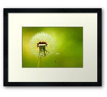 A Dandelion Blown By The Wind Framed Print