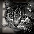 Little kitten by asyrafdamien