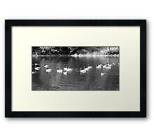 B&W Ducks and Geese Framed Print
