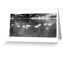 B&W Ducks and Geese Greeting Card