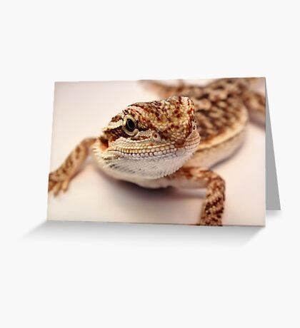 baby bearded dragon Greeting Card