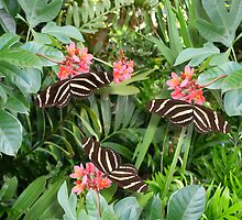 Zebra long wing butterfly trio by Irisangel
