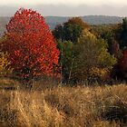Colors of the Fall VIII by alecksmart