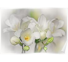 Couple of Freesias... Poster