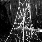 Spiderweb by Fyrion