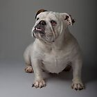 Babe the Bulldog 2 by Mark Cooper