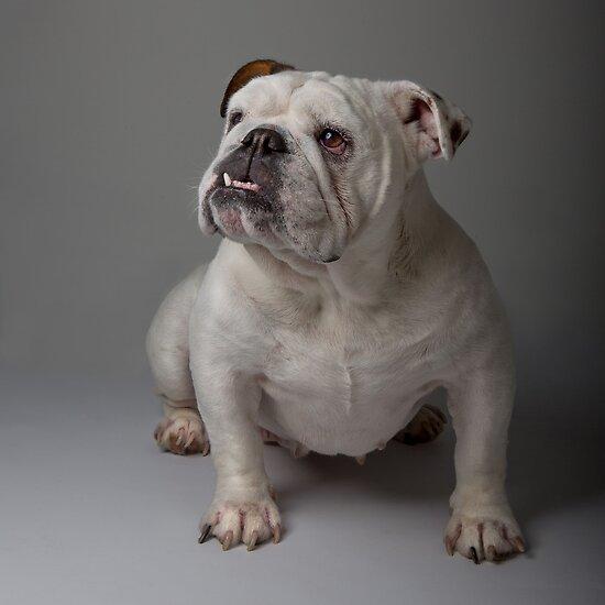 Babe the Bulldog 2 by Mark Cooper