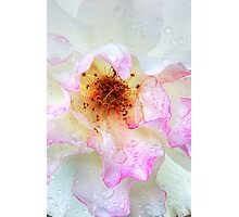 Rose Close-up Photographic Print