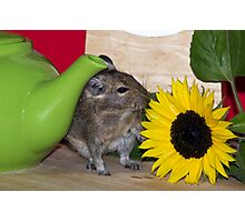 Green Tea & Sunflower Photographic Print