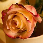 BI COLOR DRAMATIC ROSE by pjm286