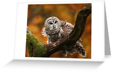 Barred Owl ~ by Renee Blake