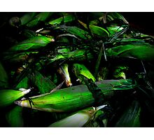 Corn Husks  Photographic Print