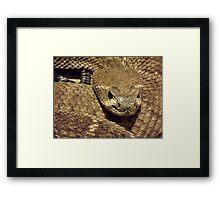 feeling snakey?  Framed Print