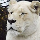 white lioness close up  by uptzphotography