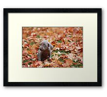 All Alone in This Big Old World Framed Print