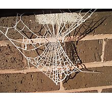 frosted web Photographic Print