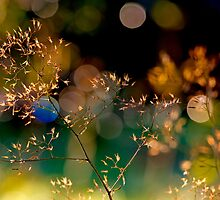 All That Glitters is...? by Keld Bach