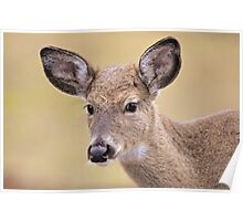 Young Whitetail Poster