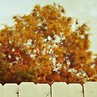 looking like fall over the fence by beverlylefevre