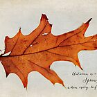 this autumn leaf by beverlylefevre
