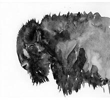 Buffalo Photographic Print