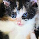 I'm the Cutest - Take Me by aprilann