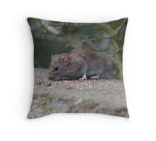 Common Brown Rat Throw Pillow