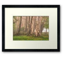 Giants In The Mist - Mount Wilson, NSW Australia - The HDR Experience Framed Print