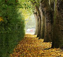 Autumn alley by flashcompact