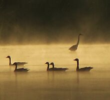 Golden Misty Morning by lorilee