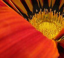 Garden in a flower by Ikramul Fasih