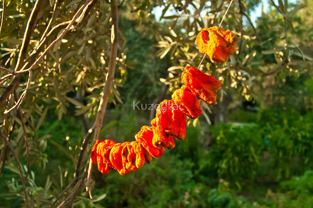 Organic Bell Peppers Hanged To Sun Dry  by Kuzeytac