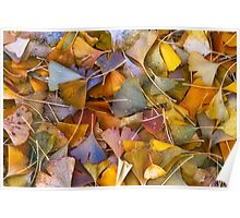 Fall Ginkgo Leaves Poster