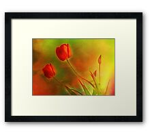 "Tulips (from ""Painted flowers"" collection) Framed Print"