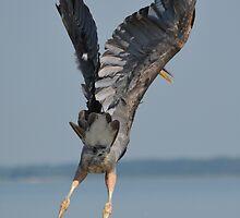 Heron Hands Up by BeachBumPics