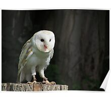 owl! Poster