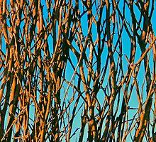 Blue Cane by James mcinnes