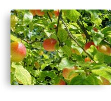 Plum Oilpaint Effect Canvas Print