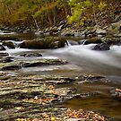 Autumn Stream  by dlhedberg