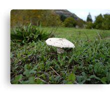 Meadow Mushroom Canvas Print