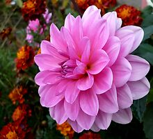 Pink and Orange by Jess Meacham