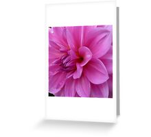 Petals (available in ipad cases) Greeting Card