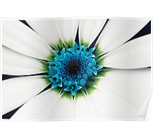 White petals Poster