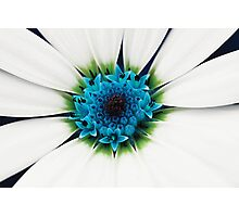 White petals Photographic Print