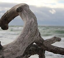 Driftwood and the Sea by karina5