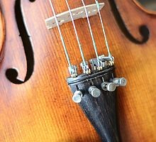 Violin  by Steven Gibson