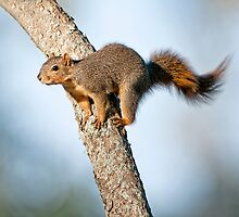 Just squirreling around . . . by Bonnie T.  Barry